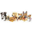 dog breeds set vector image vector image
