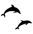 dolphins on white background vector image