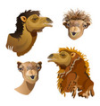 head of camel set vector image vector image