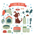 set accessories for dog vector image vector image