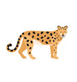jaguar isolated on white background stunning wild vector image vector image