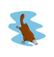 Platypus Diving vector image vector image