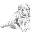 puppy of german shepherd vector image