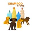 animal grooming salon dog hair vector image