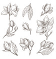 wild blossom magnolia flower plant isolated vector image vector image