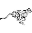 cheetah during the chase africa vector image vector image