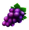 grapes icon isolated on white background vector image vector image