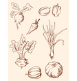 hand drawn vintage vegetables vector image vector image