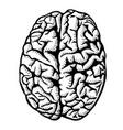 human brain vector image