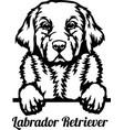 labrador retriever peeking dog - head isolated vector image vector image