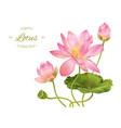 Lotus realistic vector image vector image