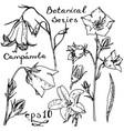 campanula botanic series vector image vector image