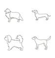 collie dachshund labrador pikinesedog breeds vector image