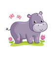 hippo standing in the meadow with flowers vector image
