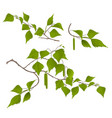 twigs birch with catkins set first vector image vector image