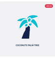 two color coconuts palm tree brazil icon from vector image