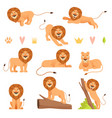 lion cartoon wild running yellow fur animal king vector image