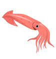 squid isolated on a white background vector image