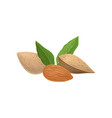 delicious almond nuts and green leaves organic vector image