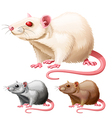 lab rat vector image
