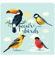 set of four birds vector image