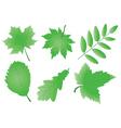 vector editable green leaves vector image
