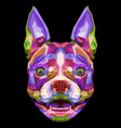 colorful boston terrier dog on pop art style vector image vector image