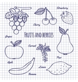 Hand draw fruits and berry vector image vector image