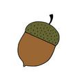 hand drawn acorn vector image