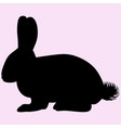hare or rabbit vector image vector image