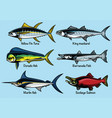 set of colored fish vector image
