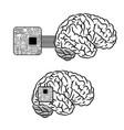 brain microscheme background vector image