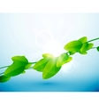 Nature leaves background vector image vector image