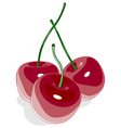 Red sweet cherry isolated on white vector image