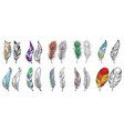 colorful detailed bird feathers vector image vector image