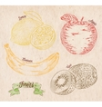Fruit lemon apple banana kiwi country vector image