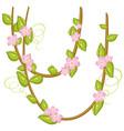 pink flowers on vines vector image