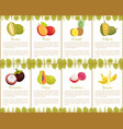 durian and mangosteen slices posters set vector image
