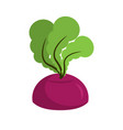 beet growing isolated fresh vegetables on white vector image vector image