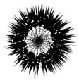 explode flash star burst isolated on white vector image vector image