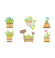 indoor and outdoor potted plants set home or vector image vector image