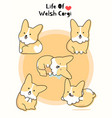 real cute welsh corgi set vector image
