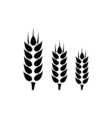 Wheat Icon Flat vector image