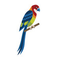eastern rosella colorful exotic parrot in flat vector image vector image