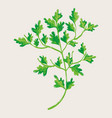 green nice plant decoration botany vector image vector image