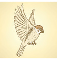 Sketch cute sparrow vector image