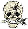 skull with arrow and spider vector image vector image