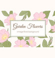 garden flowers wild rose vintage banner background vector image vector image