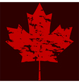 Maple leaf grunge vector image vector image
