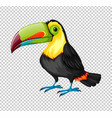 toucan bird on transparent background vector image vector image